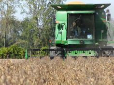 Harvesting Pedigreed Soybeans In Ontario - Devolder Farms
