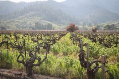 Travelogue: 48 hours in Napa Valley, California (April 2011) - Hither & Thither