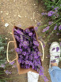 Lavender Aesthetic Purple Spring Flower Pick Em