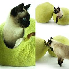 Cat Bed, House, Cave, Handmade, Handmade Birch Green Large Modern, beautifully designed from sheep wool cat house, bed, cave. Handmade, wool felt cat house are durable and easily cleaned. Comfortable bed for your pet's healthy sleeping and rest. Perfect for Cats to play and sleep inside or on top.