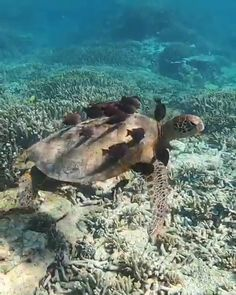 Cleaning zone You are in the right place about Sealife jewellery Here we offer you the most beautiful pictures about the Sealife you are lo Funny Animal Videos, Cute Funny Animals, Cute Baby Animals, Beautiful Sea Creatures, Animals Beautiful, Nature Animals, Animals And Pets, Turtle Love, Green Turtle