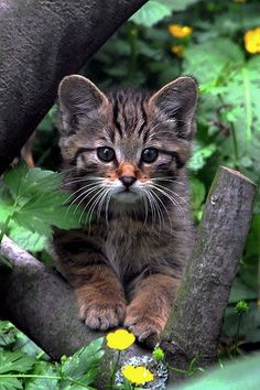 Cute Little Kitty in the Woods: - Kittens - Ideas of Kittens - Cute Little Kitty in the Woods: The post Cute Little Kitty in the Woods: appeared first on Cat Gig. Pretty Cats, Beautiful Cats, Animals Beautiful, Beautiful Pictures, Cute Baby Animals, Animals And Pets, Funny Animals, Funny Horses, Animal Babies