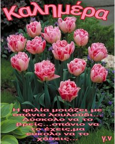 Good Morning, Beautiful Flowers, Rose, Plants, Cards, Photos, Buen Dia, Pink, Pictures