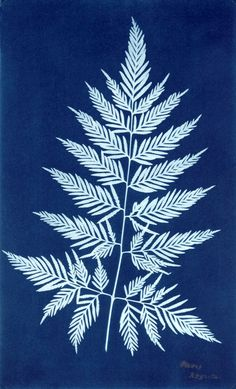 Cyanotypes Who was Anna Atkins? The cyaype process was used most famously by Anna Atkins 's in her 12 part book British Algae: Cyanotype Impressions . This was the first book ever to be. Atkins, Cyanotype Process, Sun Prints, Alternative Photography, Experimental Photography, History Of Photography, Patterns In Nature, Ferns, Art Paintings