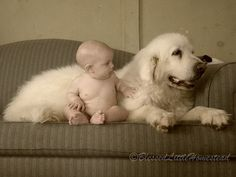 Amazing how they are sooo gentle with the smallest ones! Baby Puppies, Baby Dogs, Doggies, Dogs And Puppies, Dogs And Kids, Animals For Kids, Animals And Pets, Cute Animals, Pyrenees Puppies