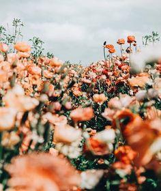 Such a beautiful floral depth of field photo by KYA Swim (KYA Swim). – – beauty photography nature Such a beautiful floral depth of field photo by KYA Swim (KYA Swim). – Such a beautiful floral depth of field photo by KYA Swim (KYA Swim). Samsung Wallpapers, Sports Wallpapers, Wild Flowers, Beautiful Flowers, Fresh Flowers, Spring Flowers, Orange Flowers, Flowers Nature, Exotic Flowers