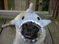Silly knit hats for dogs....or cats. I might make this shark one for Ginger.