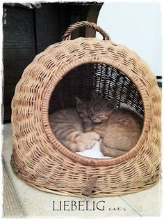 how cute is this cat basket:):