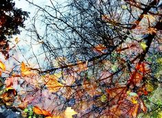 fall mirror by Matild Mihályi Vineyard, Mirror, Fall, Photos, Outdoor, Autumn, Outdoors, Pictures, Fall Season