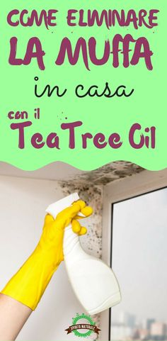 Come eliminare la muffa in casa con il tea tree oil
