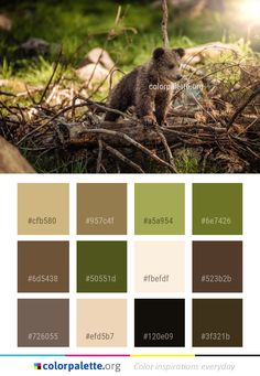 Fauna Mammal Wildlife Color Palette #colors #inspiration #graphics #design #inspiration #beautiful #colorpalette #palettes #idea #color #colorful #colorscheme #colorinspiration #colorcombinations #colorcombos #colorpalette_org