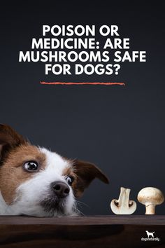 Mushrooms are a powerful tool when it comes to natural healing. From digestive upset to infections to cancer … mushrooms can help your dog in so many ways.   But mushrooms sometimes get a bad rap.   And it makes sense … some mushrooms can be very dangerous to you and your dog.   That shouldn't stop you from adding the good ones to your dog's diet though.  Click here to see which mushrooms SHOULD be in your dog's bowl.