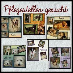 Pflegestelle werden?  Für all diese Hunde werden noch liebevolle Pflegestellen gesucht. Es fallen keinerlei Kosten als Pflegestelle an.   Meldet Euch!  Mo-Di u. Do-Sa unter 49 162 247 15 87 v. 10-13h u. 15-18h   Mo-Do u. Sa unter 49 1514 1671913 v. 10-13h u. 15-18h   Di-Sa unter 49 151 67204886 v. 15-19h  Wir sind ein als gemeinnützig anerkannter eingetragener Tierschutzverein und arbeiten mit aktuellsten amtstierärztlichen Genehmigungen nach  11 Absatz 1 Abschnitt 5 TierSchG (nicht zu…