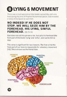#science #islam #miracles the frontal lobe controls the personality and the ability for someone to lie.