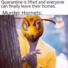 Spread the loveMurder Hornet Meme I hope you enjoy are compilation of the funniest Murder Hornet Memes. Let us know down in the comments which giant murder hornet meme is your favorite! Stupid Funny Memes, Funny Relatable Memes, Funny Posts, Funny Stuff, Random Stuff, Funny Humor, Funny Things, Super Funny, Funny Cute