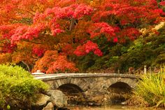 Fall season - Stone bridge by Rajkiran Ghanta on 500px