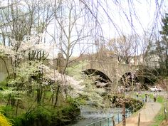 Trees and Bridge in Cherry Blossom Park photo by Virginia Varela