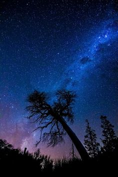 Magical Tree by Jeremias Thomas on Starry Night Wallpaper, Magical Tree, Gods Creation, Beautiful Sky, Milky Way, Northern Lights, Scenery, Artist, Nature