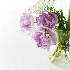 八重咲きのチューリップは散り際も綺麗なんですね。大きく開いて頭を下げる姿もいいものだなと思いました。 #北欧暮らしの道具店#花#お花#ザ花部#花のある暮らし#花のある生活#朝#あさ#朝時間#チューリップ#レースフラワー