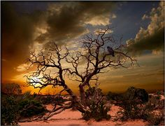 Moab Tree, Arches National Park via MuralsYourWay.com