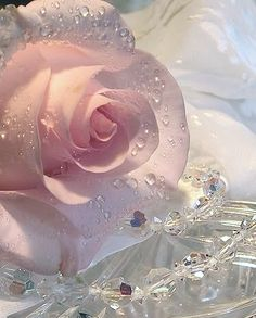 Rose and necklace pink jewelry flowers pretty rose drops wet