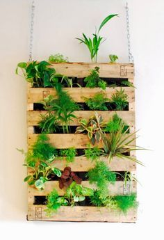 Attractive Wall Hanging Herb Garden   Google Search