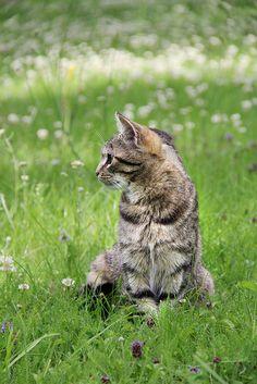 Flowerheart medicine cat