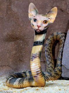 Cat Snake [picture]