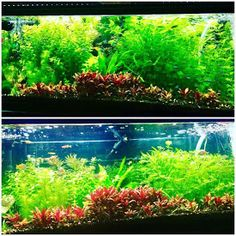 Planted freshwater aquarium with LED lighting, NilocG EI ferts Led Aquarium Lighting, Plant Lighting, Aquarium Lamp, Aquarium Fish Tank, Planted Aquarium, Fish Tank Lights, Aquarium Accessories, Tanked Aquariums