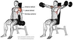 Seated dumbbell lateral raise. An isolation pull exercise. Main muscles worked: Lateral Deltoid, Anterior Deltoid, Serratus Anterior, Supraspinatus, and Middle and Lower Trapezii.