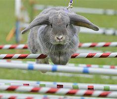 Rabbit-Jumping Competitors Show Off Skills, Daring Ducklings Cross Highway