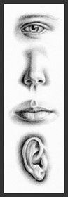 Pencil Portrait drawing tutorial - http://www.diyprojectidea.net/pencil-portrait-drawing-tutorial