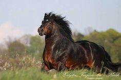 Horse Power… The strong Ardennes Horse is one of the oldest draft horse breeds Cowboy Magic Big Horses, All About Horses, Horse Love, Most Beautiful Horses, All The Pretty Horses, Majestic Horse, Majestic Animals, Beautiful Creatures, Animals Beautiful