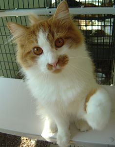 Who can refuse Jace? Check out the Cumberland Valley Animal Shelter at 263-5791.