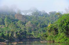 Uma incursão por duas Amazônias bem distintas