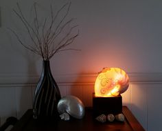 Pearled Nautilus shell lamp