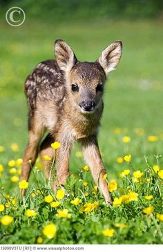 baby fawn with his spots
