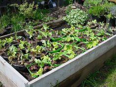 Salad Bowl Mini Gardens