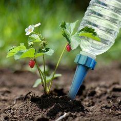 4er Set Wasserspender für Pflanzen