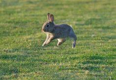 Bunny hopping ✿⊱╮