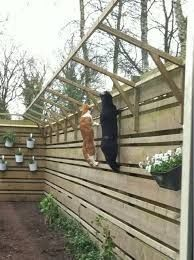 Cats fence for closed in catio! #cat #catio