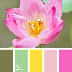бледно-розовый, бледно-салатовый, бледный розовый, гамма для свадьбы, желтый, зеленый, лиловый цвет, малиновый, нежные цвета для свадьбы, оттенки зеленого, оттенки розового, пастельный розовый, розовый, салатовый, теплый желтый, теплый зеленый, цвет
