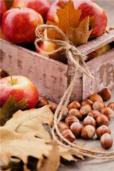 Apples, hazelnuts, and a worn wood table. The epitome of autumn