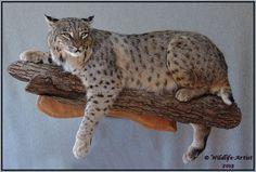 bobcat wall mount - Google Search