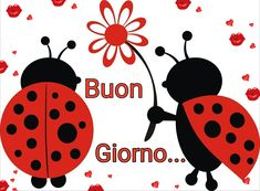 Buon giorno Say Hello, Ladybug, Good Morning, Mickey Mouse, Disney Characters, Fictional Characters, Pictures, Hygge, Video