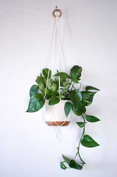 Image result for macrame pothos plant