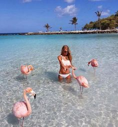 There's a Beach in the Caribbean Where You Can Swim with Flamingos Renaissance Resort & Casino hotel in Aruba has. The Places Youll Go, Places To Visit, Places To Travel, Travel Destinations, Holiday Destinations, Aruba Hotels, Beach Hotels, Beach Resorts, Casino Hotel