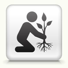 Square Button with Planting Tree royalty free vector art vector art illustration
