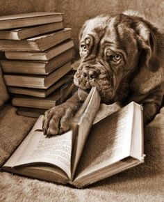 Dog Reading book and turning pages