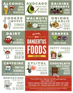 Toxic food for dogs: Every dog owner should print out this card! *** More info could be found at the image url. #DogsTraining